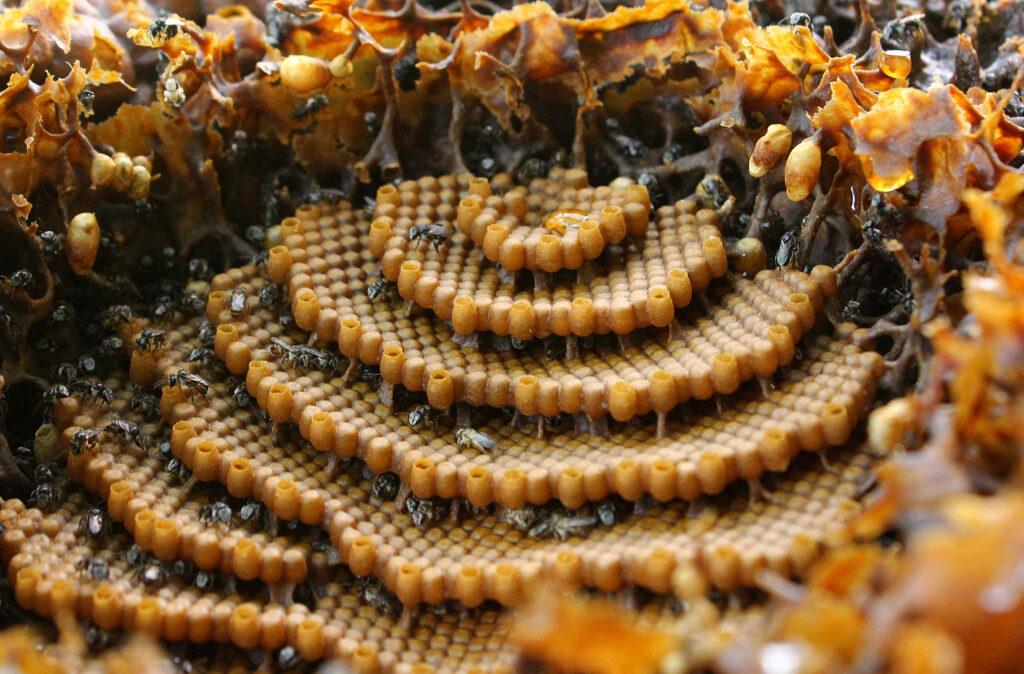 خلية النحل من الداخل