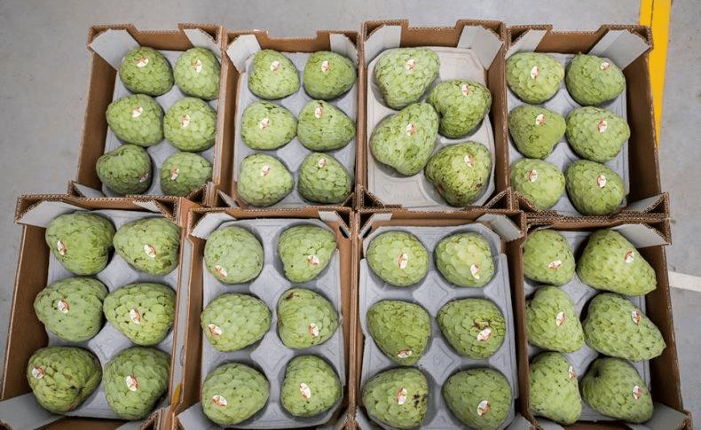 فاكهة السرسوب (الغرافيولا): الفوائد والاستخدامات الصحية